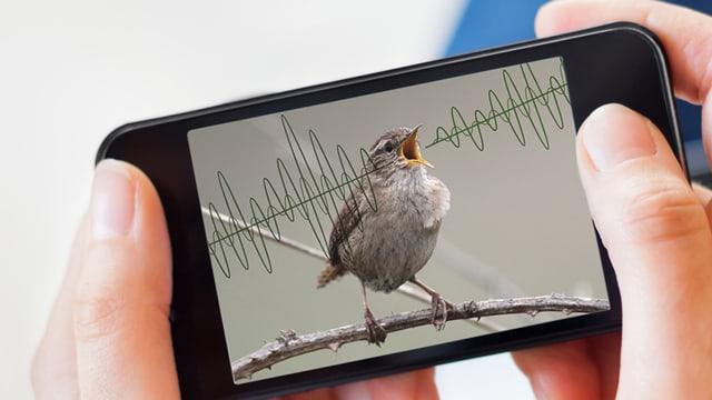 Hände halten ein Smartphone. Darauf: Eine Bildkollage eines kleinen Vogels und Schallwellen.
