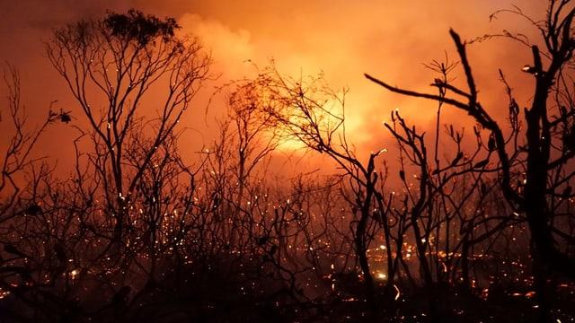 Buschbrand im November 2018 in Queensland
