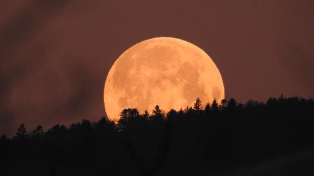 Der rote Mond taucht unter den bewaldeten Horizont.