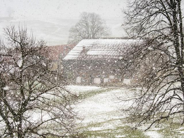 Schneefall in Obere Steinegg/SG