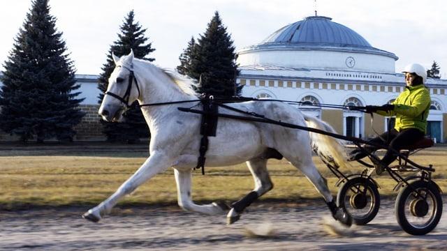 Video «Russlands Pferde – Traber und Traditionen (4/5)» abspielen