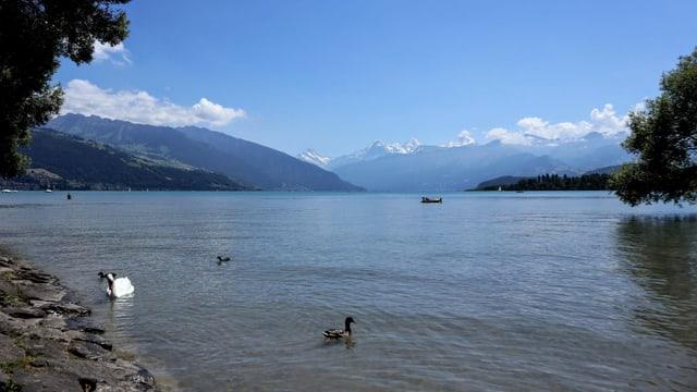 Blick von Thun über den See. Nur über den Bergen des Oberlandes hat es Quellwolken.