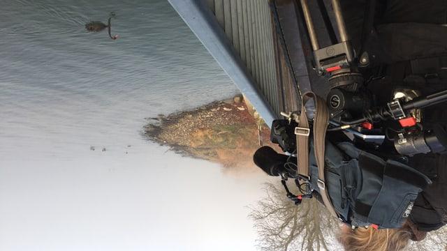Kameramann mit Ausrüstung filmt über ein Geländer den schwarzen Schwan.