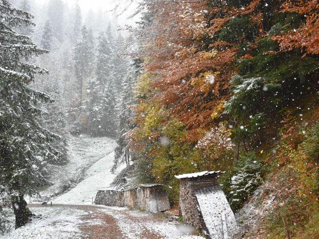 Wald mit farbigen Bäumen aber auch Schnee