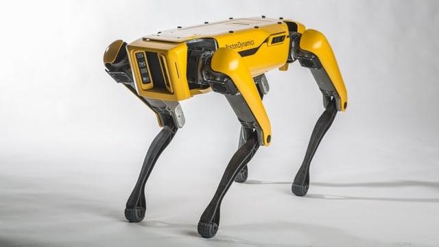 Roboterhund