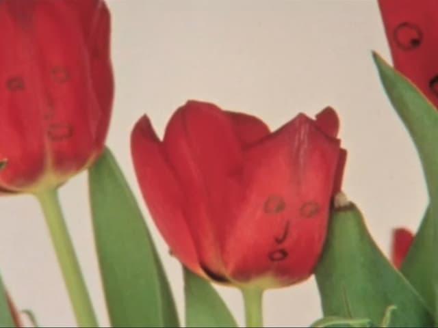 Tulpen mit Gesicht