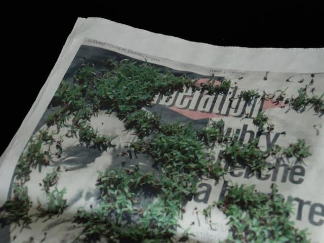 Keime auf Zeitung