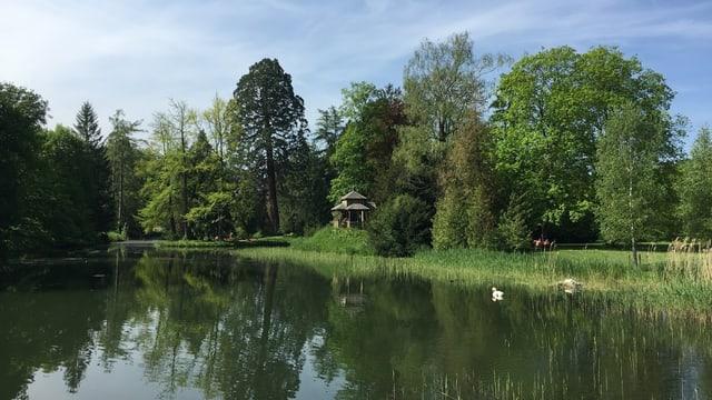Der Ballypark - im Vordergrund ein Weiher - im Hintergrund ein Mammutbaum und ein kleines Haus