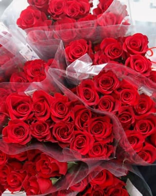 plirs puschels rosas cotschnas