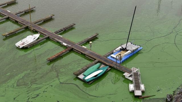 Boote auf giftgrünem Wasser