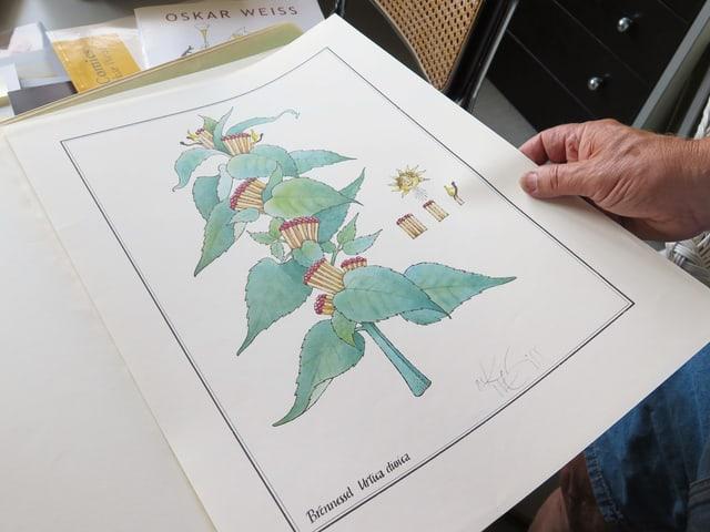 Brennesselpflanze mit Zündhölzchen am Stamm