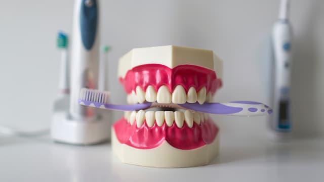 Ein Symbolbild aus einer Zahnarztpraxis. Ein Gebiss-Modell mit einer Zahnbürste zwischen den Zähnen.