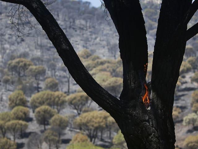 Verkohlter Baum in trockener Landschaft, es züngeln noch kleine Flammen aus dem Holz.