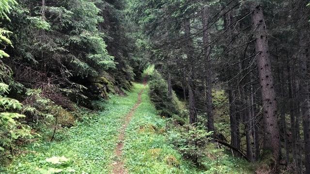 Legendas da la Val Schons – Il til da bara dal Plàn dals morts