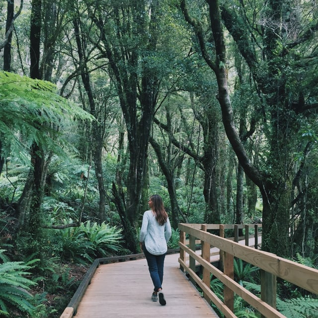 Sensu in Neuseeland