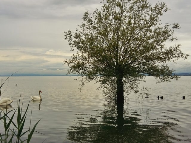Baum steht im Wasser.