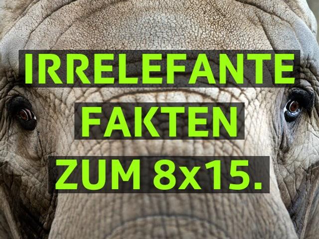 Elefantengesicht mit einer Überschrift irrelefante Fakten