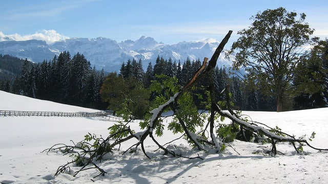 Frischverschneite Landschaft im Appenzellerland. Ein Ast ist unter der Schneelast abgebrochen.