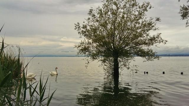 Schon seit Tagen besteht am Bodensee Hochwassergefahr der Stufe 4.