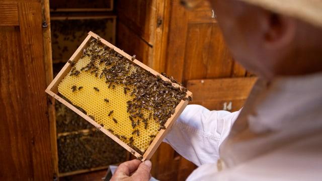 Ein Imker pflegt sein Bienenvolk.