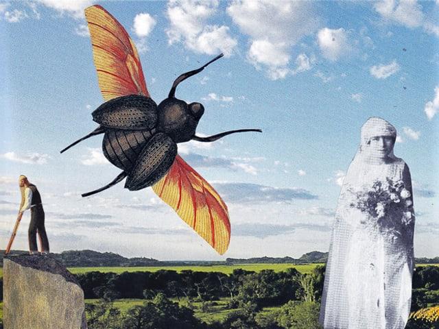 Eine Grafik zeigt eine grosse Fiege vor landschaftlichem Hintergrund, daneben eine schwarz-weiss dargestellte Frau mit Schleier.