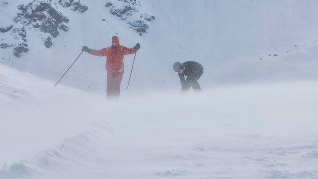 Favugn buffà sur las Alps Svizras.