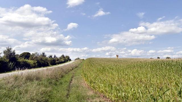 Ein Stück bepflanztes Ackerland.