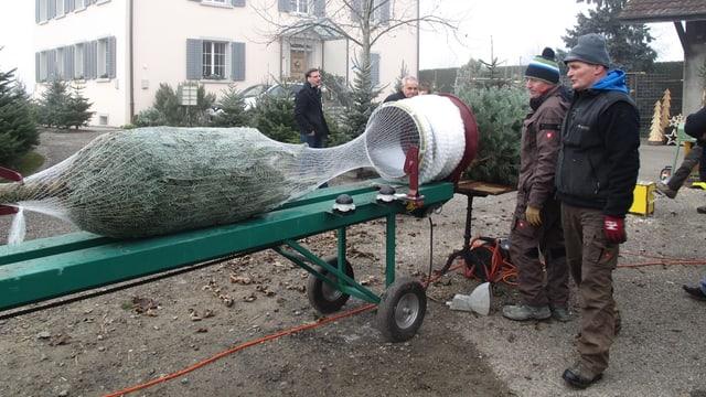 Die beiden Männer verpacken einen Weihnachtsbaum