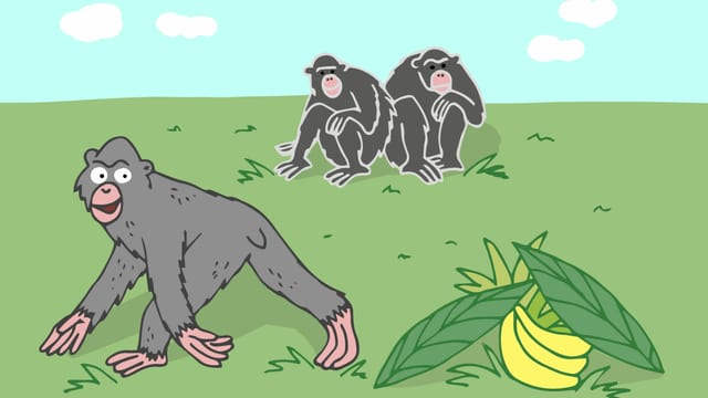 Zwei Affen sitzen auf einem Stein. Ein anderer Affe hat einen Strauch Bananen unter Blättern versteckt.