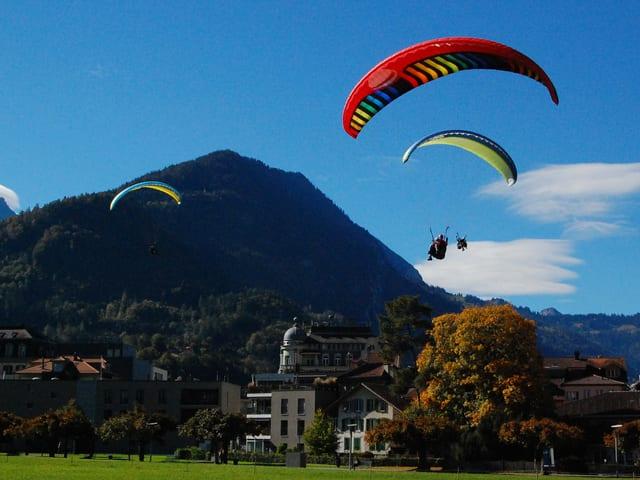 Drei Gleitschirme im Anflug auf Interlaken.