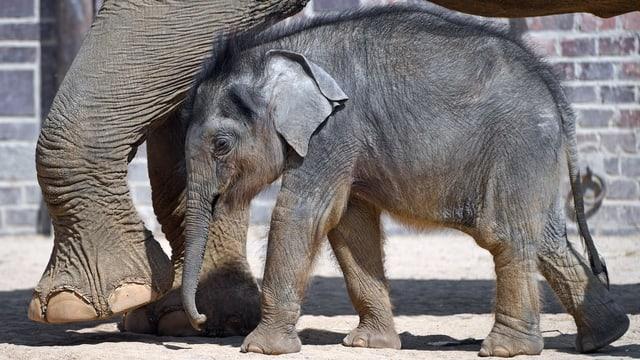 Mutterelefant und kleiner Elefant