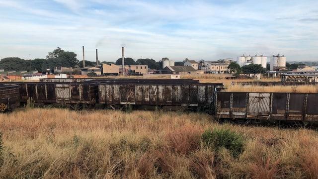 Ein alter Zugwaggon steht auf einer dürren Wiese und verrottet.