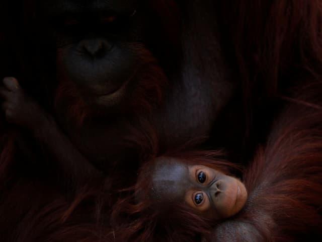 Mutter mit Jungem