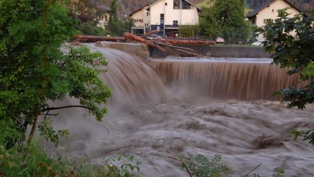 Viel Wasser im Fluss mit Schwemmholz.