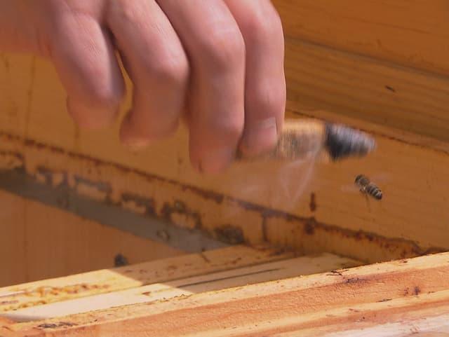 Rauchendes Holzstück mit Biene