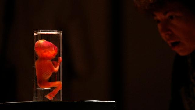 Embryo im Reagenzglas