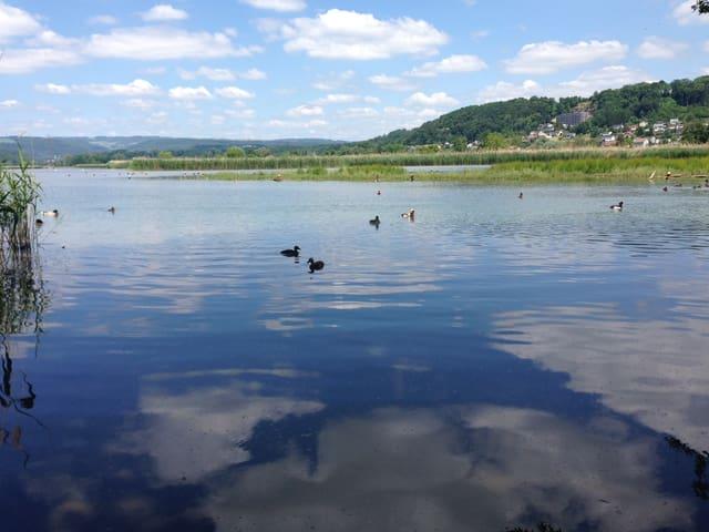 Stausee und Enten