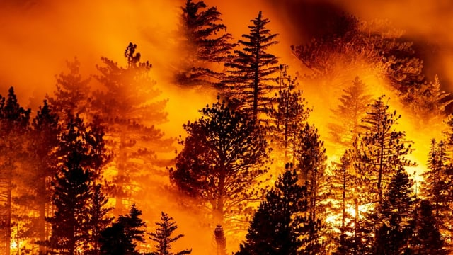 Waldbrand.
