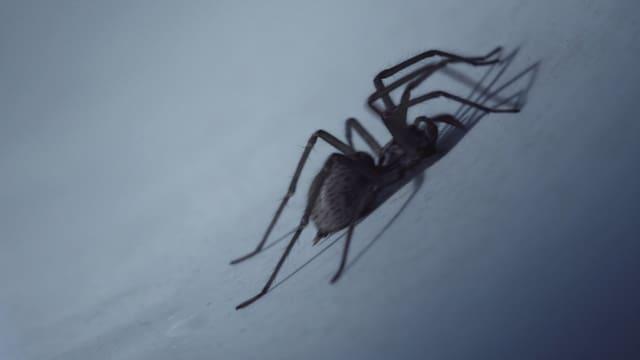Video ««Einstein»–Spezial: Spinnen» abspielen