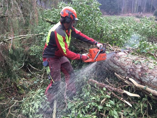 Forstwart zersägt einen Baum.