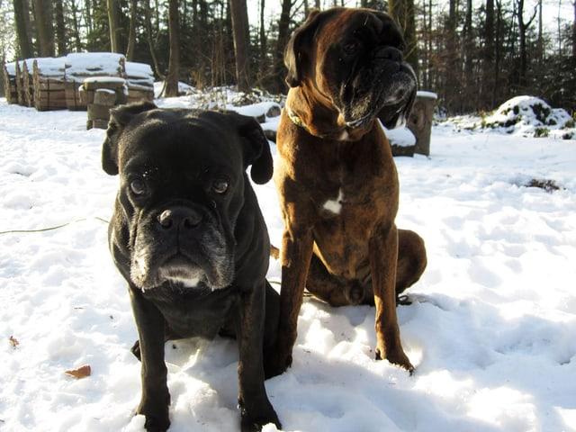 Zwei Hunde im Schnee.