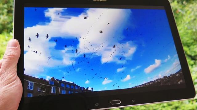 Ein Tablet, auf dem zahlreiche Vögel cor blauem Himmel zu sehen sind.