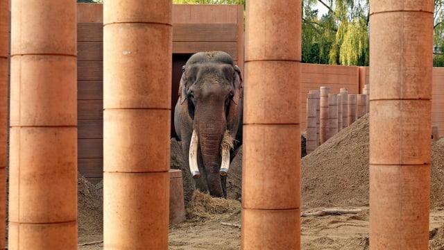 Ein Elefant hinter ockerfarbenen Säulen.