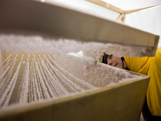 SLF-Angestellter guckt durch einen Spalt in einer Holzkiste, durch die schneebedeckte Fäden gespannt sind.