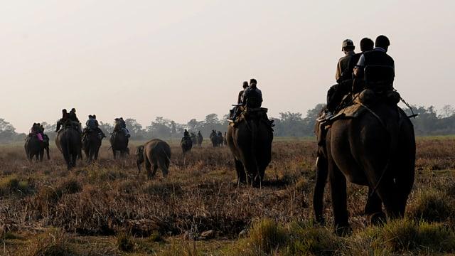 Eine Gruppe von Touristen reitet auf Elefanten.
