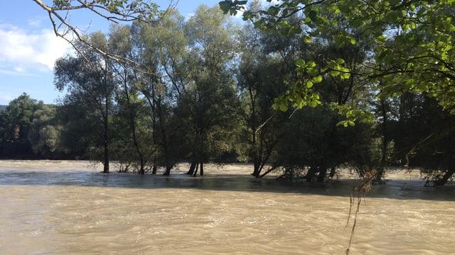 Bäume in einer Überschwemmung