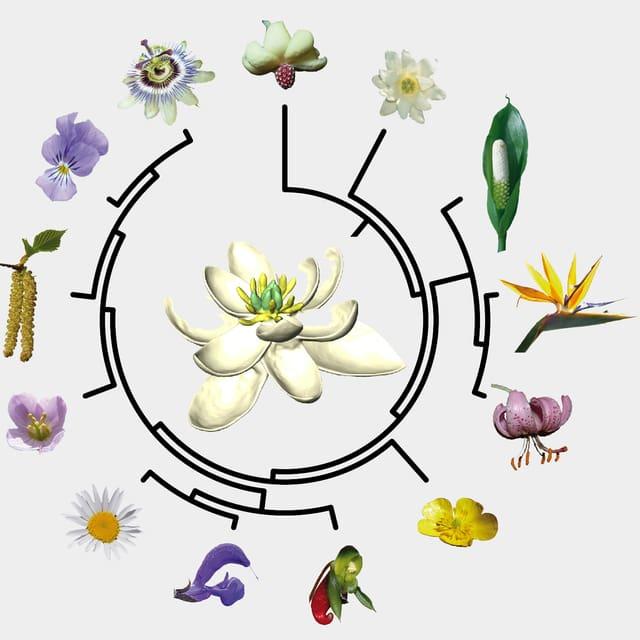Schema mit verschiedenen Blüten