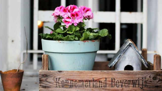 Auf einem Fenstersims steht eine Holzkiste mit einem Blumentopf und einem Vogelhäuschen drin.