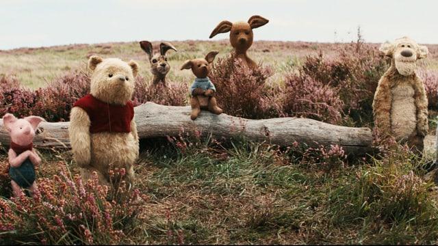Plüschtiere stehen in der Natur. Von links nach rechts: ein Ferkel, ein Bär, ein Hase, ein kleines und ein grosses Känguru, ein Tiger.