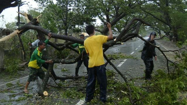 Vier Männer vesuchen, einen umgestürzten Baum von einer Strasse zu tragen